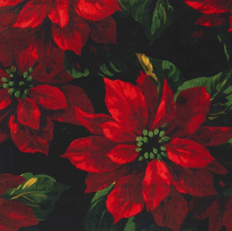 Scarlet Poinsettia